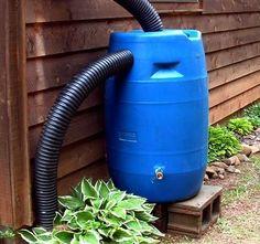 How To Make A Rain Barrel.  I like the flexible pipes.
