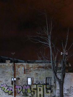 Κατοικία και δέντρο. Οδός Μοναστηρίου. (Οκτώβριος 2016)