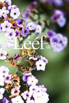 Natuur/ aards, tuin/garden. www.leef.co.za