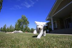 An Afternoon With Tucker by Back in the Pack, via Flickr