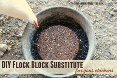Fight boredom in your flock by creating your own DIY flock block substitute bricks. Your chickens will thank you! Chicken Treats, Chicken Feed, Chicken Coops, Raising Chickens, Raising Ducks, Keeping Chickens, Down On The Farm, Chickens Backyard, Flocking