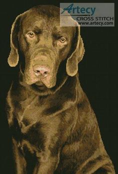 Chocolate Lab - I have to get this one, it looks just like Charlie Brown!!