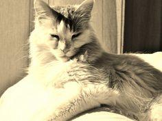Wally (1) Cats, Animals, Gatos, Animales, Kitty Cats, Animaux, Cat, Animal, Animais