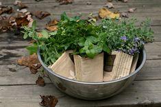 Kertészkedés kert nélkül?