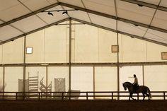 Andalusische paarden op de Sicab in Sevilla - nrc.nl