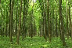 Green Passage