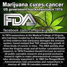 Cannabis research has been shutdown by our government for a reason... Big Pharma | #1Cure4Cancer | www.mycutcorep.com/JamesTaylor