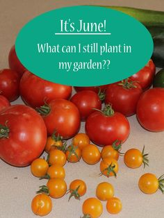 Beautiful Vegetables That Are Perfect To Plant In Late Summer #dan330  Http://livedan330.com/2015/08/17/perfect Late Summer Vegetables To Plant/ |  Gardening ...