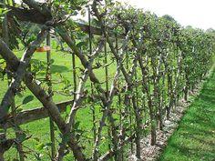 4 Daring Cool Tips: Privacy Fence Wind Load Garden Fence Quilt Pattern Free.Garden Fence Ideas Home Depot Garden Fence Varnish. Garden Fencing, Garden Art, Garden Landscaping, Trellis Fence, Fence Slats, Brick Fence, Cedar Fence, Farm Gardens, Outdoor Gardens