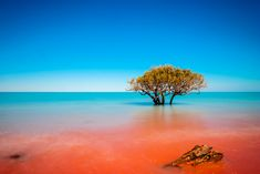 Most Beautiful Places in Australia Photos - Where Red Dirt Meets the Ocean at Crab Creek in Broome Australia Australia Photos, Australia Travel, Broome Australia, Beautiful Places To Visit, Cool Places To Visit, Australia Tourist Attractions, Water Temple, Australia Landscape, All Nature