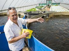 Back Yard Tilapia Farming Aquaponics   Visit my personal DIY Aquaponics setup at http://www.davaoaquaponics.com/blog/