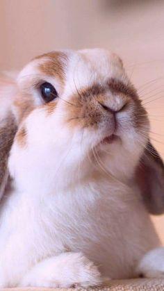 Too cute - bunny Super Cute Animals, Cute Little Animals, Cute Funny Animals, Cute Bunny Pictures, Cute Baby Bunnies, Lop Bunnies, Tier Fotos, Cute Creatures, Animals Beautiful