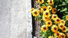 Stein und Blumen Photoshop, Plants, Boden, Stones, Plant, Planets