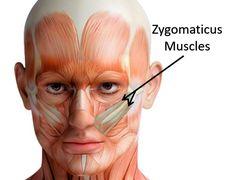 Tvarované a pevné líčka. Cvičenie na veľký lícny sval (zygomaticus) - AntiAge.sk Healthy Nutrition, Diy Face Mask, Face And Body, Beauty Care, Reiki, Anti Aging, Anatomy, Medicine, Health Fitness