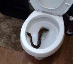 Blogger do Rhoney: Família chama resgate após achar cobra em sanitári...