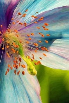 Macro Photography Essence of Blue Poppy art print by Sharon M Connolly. Our art prints are produced on acid-free papers using archival inks to guarantee that they last a lifetime without fading or loss of color. All art prints include a 1