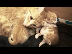Mama Cat Talks to Her Baby Kittens - We Love Cats and Kittens