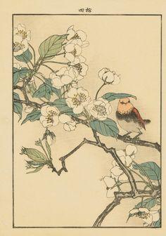 "Japanese Antique Original Woodcut Print Imao Keinen ""Pear flowers Rufous-tailed Robin"""