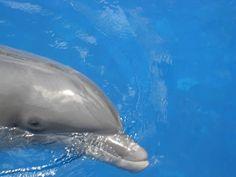 dolpfin