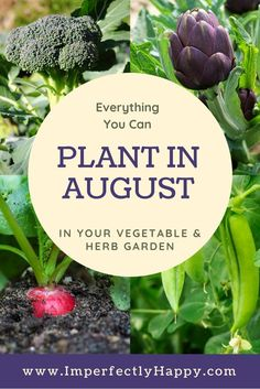 Vegetables Gardening Everything you can plant in August in your herb and vegetable garden. - What seeds to plant in August for an awesome Fall garden. Zone 9 and 10 listed. Have your best vegetable garden ever! Fall Vegetables, Organic Vegetables, Growing Vegetables, Gardening Vegetables, Winter Vegetable Gardening, Greenhouse Vegetables, Veg Garden, Edible Garden, Garden Plants