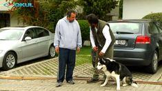 Köpeğimi Eğitiyorum - 7. Bölüm - TRT Okul Youtube, Youtubers, Youtube Movies