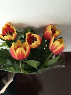 Hermosos tulipanes para mi Casa.