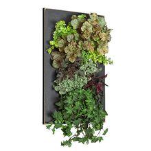 Grovert Wall Planter - Black Frame Kit