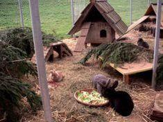 tunnel for playground corrugated tube Rabbit Shed, Rabbit Run, Pet Rabbit, Bunny Cages, Rabbit Cages, Animal Room, Animal House, Rabbit Playground, Rabbit Habitat