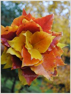Bouquet of Autumn flowers - love this!