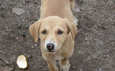 Sign: Shut Down Cruel Restaurants Caught Selling Dog Meat in India / https://ladyfreethinker.org/sign-shut-cruel-restaurants-caught-selling-dog-meat-india/?UA-40777405-1
