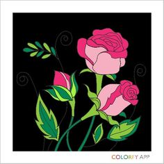My roses on Colorfy