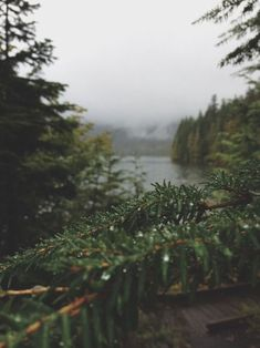 » in the trees » live off the land » under the canopy » fresh air » log homes » hard work » clear streams » fishing & hunting » simple life » backyard wildlife »