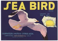 """Vintage Crate Label:  1940s SEA BIRD Sunkist citrus label Santa Barbara County, CA Approximate size: 12.25"""" x 8.75""""  All my labels are original, unused items. I do not sell reproductions.  s/h is $3.50 First Class Mail within the USA only.  Each item is carefully packaged in an archival quality sleeve with backing board to prevent damage. My home is smoke-free."""