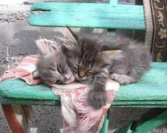 Cute Bengal Kitten - July 2016 - We Love Cats and Kittens Pretty Cats, Beautiful Cats, Animals Beautiful, Beautiful Babies, Cute Cats And Kittens, Kittens Cutest, Bengal Kittens, Siamese Cat, Baby Animals