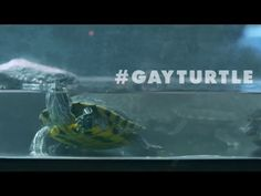 Here's what happened when a pet store tried selling gay turtles to people