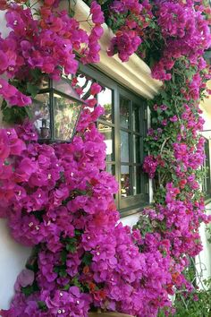 Wonderful Bougainvillea Trellis Ideas Bougainvillea Vines – Elegantly Twine Up a Trellis Wonderful Bougainvillea Trellis Ideas. Bougainvillea has been considered as one of the bright and colo… Bougainvillea Trellis, Love Flowers, Beautiful Flowers, Backyard, Patio, Jolie Photo, Trees To Plant, Beautiful Gardens, Shrubs
