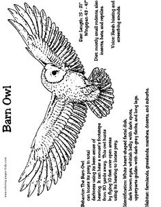 Barn Owl Coloring Sheet Owl Coloring Pages, Free Printable Coloring Pages, Coloring Sheets, Coloring Books, Kids Coloring, Owl Facts, Animal Facts, Owl Habitat, Owl Pellets