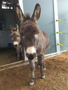 Http:// www.donkeywhisperer.com