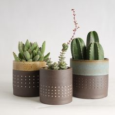 Pawena Thimaporn Dot Series - Small - Planters Potted