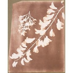 """The Telegraph:  """"Around the same time, British inventor William Henry Fox Talbot announced his negative/positive photograph process using light-sensitive paper coated with silver iodide, the precursor to most photographic processes of the 19th and 20th centuries.William Henry Fox Talbot, Photogenic drawing of flower specimens, c.1839"""""""