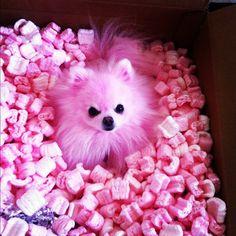 jeffree star's puppy Diamond is just the cutest!!!