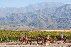 Mendoza is always a good idea. Casa de Uco from where you can do many activities as Horseback riding, hiking, Wine Tasting, & Trekking Mendoza, Best Places To Travel, Places To Visit, Visit Argentina, Argentina Travel, Argentina Culture, Conquistador, Travel Activities, Horseback Riding