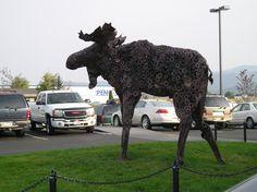 Moose in front of MacKenzie River Pizza Co., Kalispell, Montana right next door to Penco!