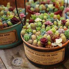 Se você gosta da planta, conhece os principais tipos de suculentas? Há muitas espécies, mas apresentaremos as mais comuns. Acompanhe o post!