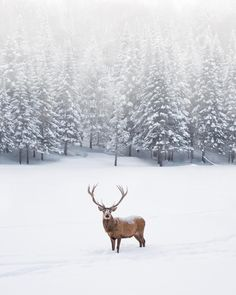 Image uploaded by Hippy. Find images and videos about winter, christmas and animal on We Heart It - the app to get lost in what you love. Winter Szenen, Winter Magic, Winter Christmas, Winter Coats, Winter Season, Merry Christmas, Rudolph Christmas, Hello Winter, Christmas Scenes