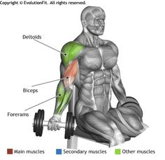 BICEPS - SEATED DUMBBELL INNER BICEPS CURL