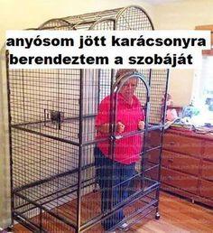 Anyós Me Too Meme, Pusheen, Funny Pins, Funny Jokes, Haha, Funny Pictures, Random, Fanny Pics, Husky Jokes