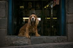 A dog sits in the doorway of a shop in Cusco, Peru.