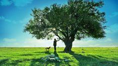 beautiful trees wallpaper | Tree Beautiful LandscapeHd Desktop s Wallpaper : Dogs HD wallpapers ...