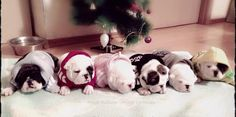 """❤ Instant Love ~ Santa will find it hard to leave these """"stockings"""" ! ❤ Posted on Baggy Bulldogs"""